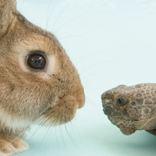Tortoise-and-the-Hare 2